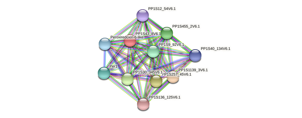 PP1S43_8V6.1 protein (Physcomitrella patens) - STRING interaction network