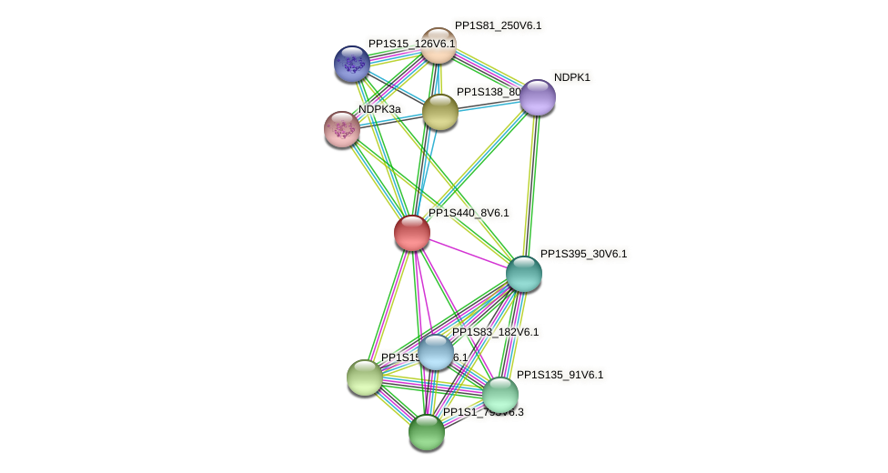 PP1S440_8V6.1 protein (Physcomitrella patens) - STRING interaction network