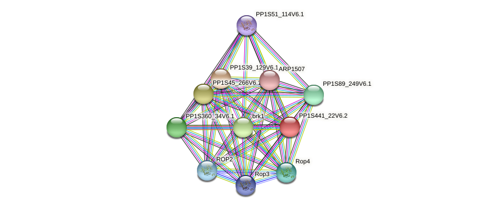 PP1S441_22V6.2 protein (Physcomitrella patens) - STRING interaction network