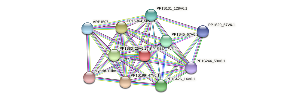 PP1S442_7V6.2 protein (Physcomitrella patens) - STRING interaction network