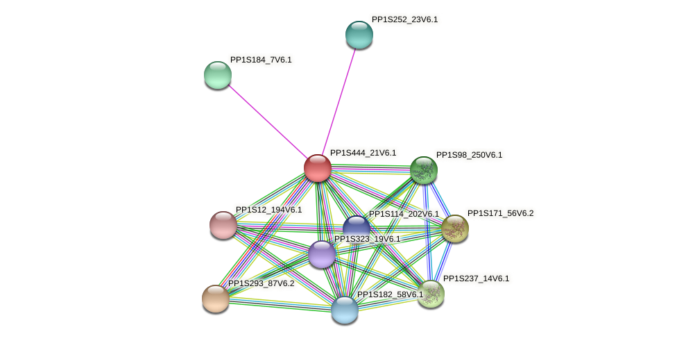 PP1S444_21V6.1 protein (Physcomitrella patens) - STRING interaction network