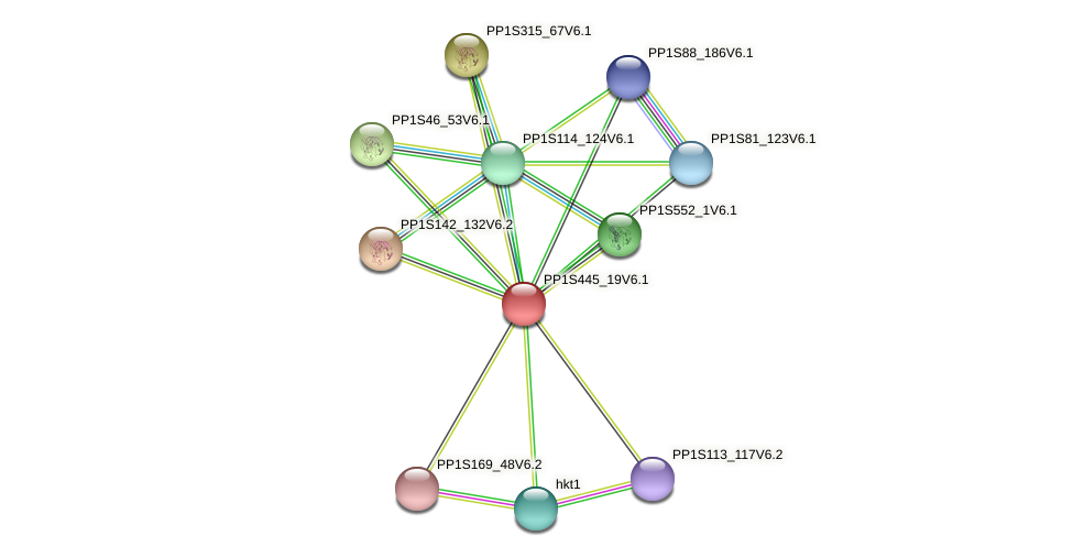 PP1S445_19V6.1 protein (Physcomitrella patens) - STRING interaction network