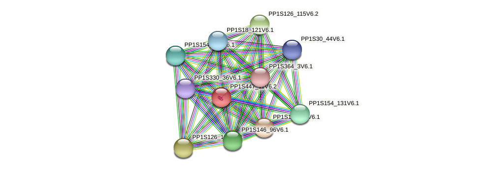 PP1S447_11V6.1 protein (Physcomitrella patens) - STRING interaction network