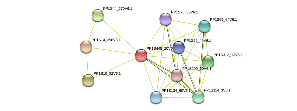 PP1S448_20V6.2 protein (Physcomitrella patens) - STRING interaction network