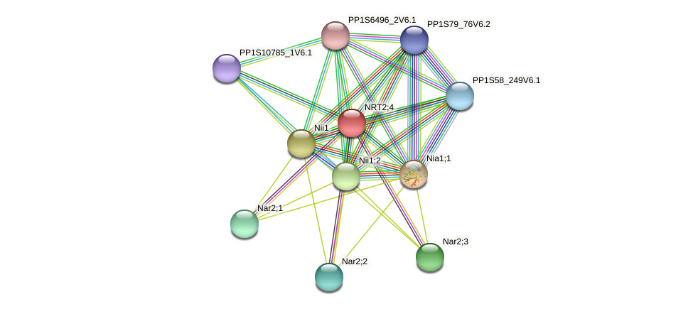 PP1S449_20V6.1 protein (Physcomitrella patens) - STRING interaction network