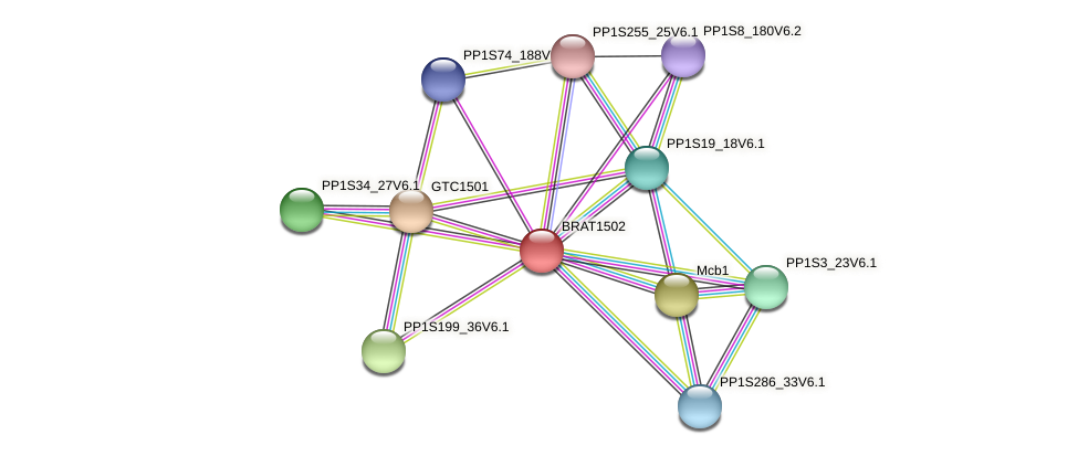 BRAT1502 protein (Physcomitrella patens) - STRING interaction network