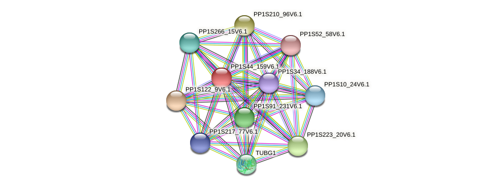 PP1S44_159V6.1 protein (Physcomitrella patens) - STRING interaction network