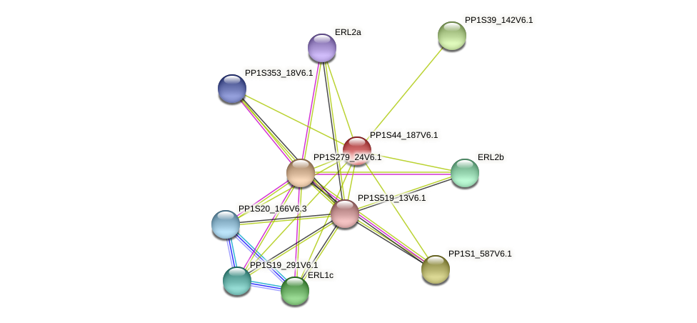 PP1S44_187V6.1 protein (Physcomitrella patens) - STRING interaction network