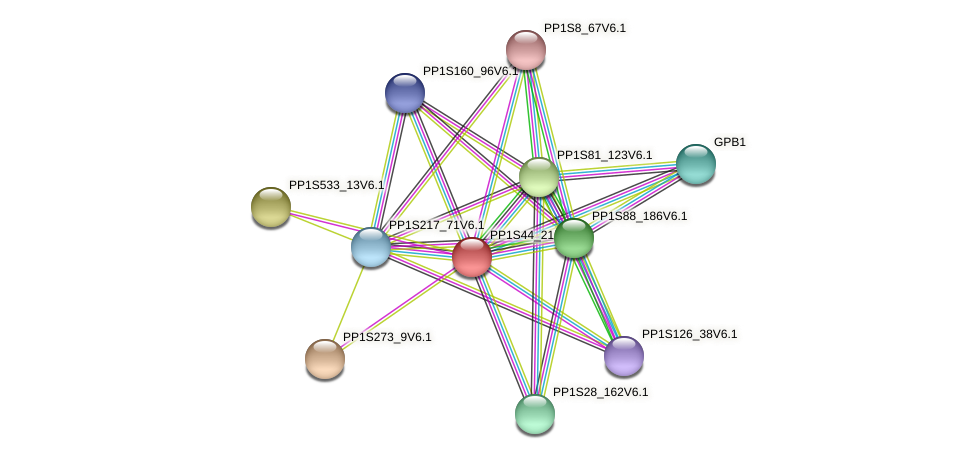 PP1S44_215V6.1 protein (Physcomitrella patens) - STRING interaction network