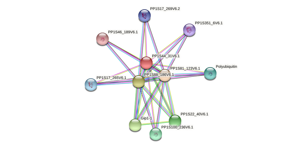 PP1S44_31V6.1 protein (Physcomitrella patens) - STRING interaction network