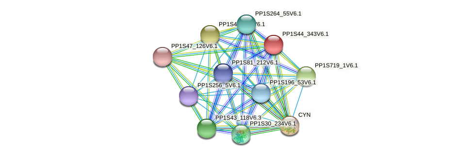 PP1S44_343V6.1 protein (Physcomitrella patens) - STRING interaction network