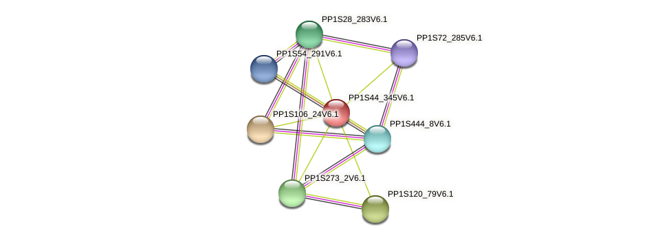 PP1S44_345V6.1 protein (Physcomitrella patens) - STRING interaction network