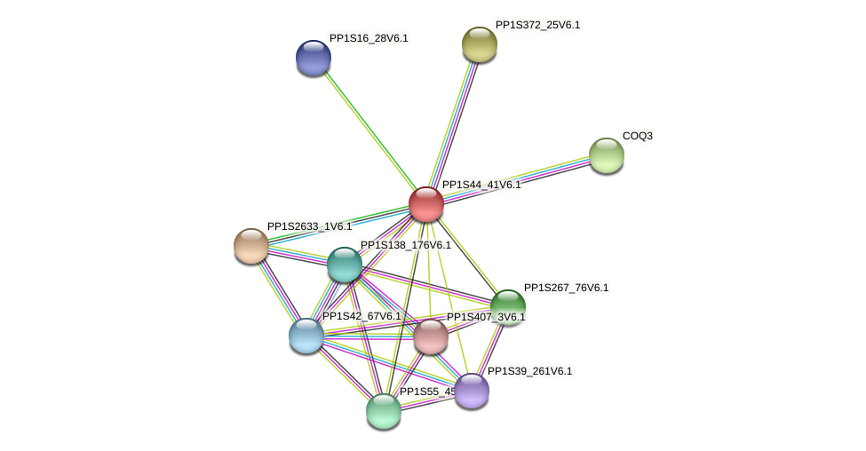 PP1S44_41V6.1 protein (Physcomitrella patens) - STRING interaction network