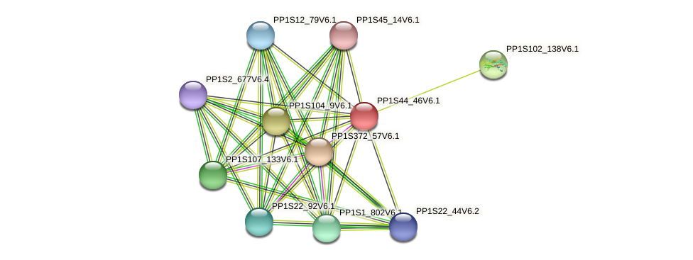 PP1S44_46V6.1 protein (Physcomitrella patens) - STRING interaction network