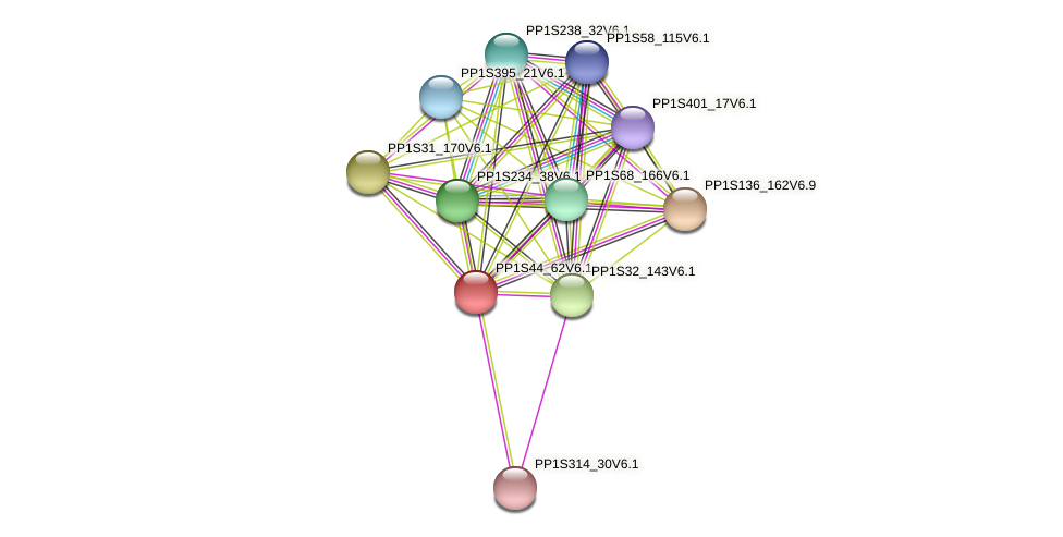 PP1S44_62V6.1 protein (Physcomitrella patens) - STRING interaction network