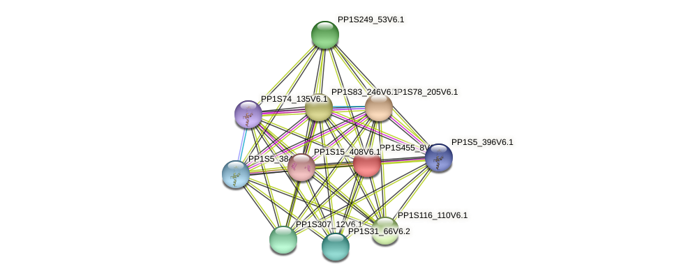 PP1S455_8V6.1 protein (Physcomitrella patens) - STRING interaction network