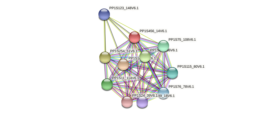 PP1S456_14V6.1 protein (Physcomitrella patens) - STRING interaction network