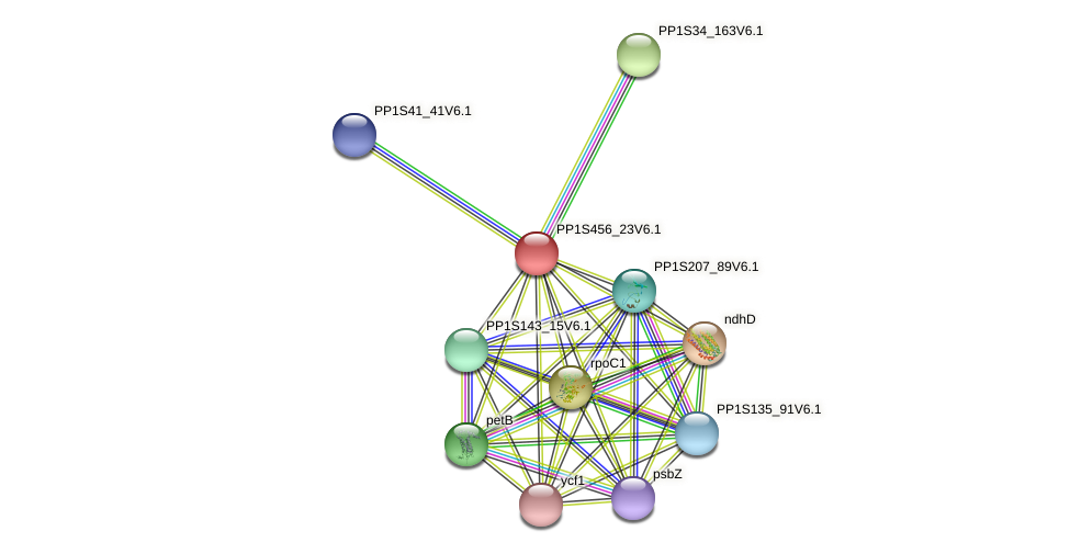 PP1S456_23V6.1 protein (Physcomitrella patens) - STRING interaction network