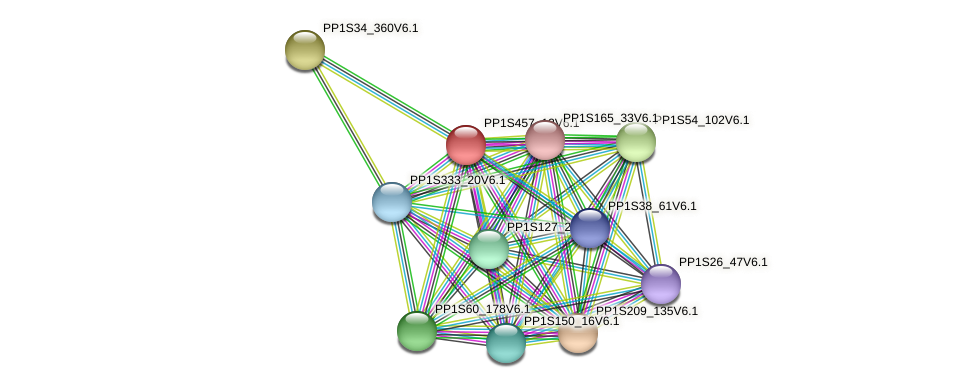 PP1S457_13V6.1 protein (Physcomitrella patens) - STRING interaction network