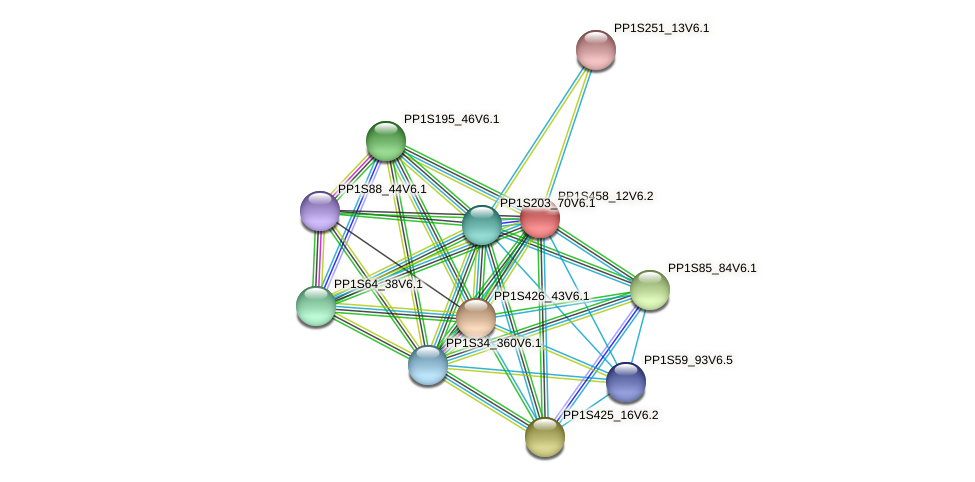 PP1S458_12V6.1 protein (Physcomitrella patens) - STRING interaction network
