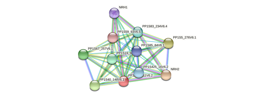 PP1S45_111V6.1 protein (Physcomitrella patens) - STRING interaction network