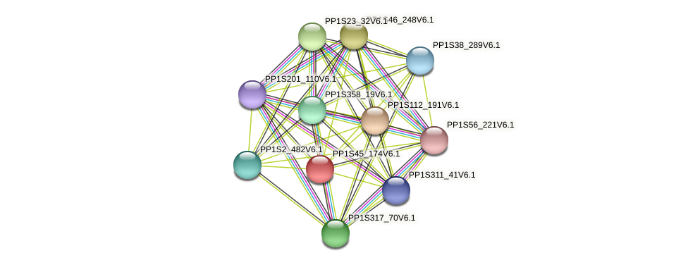 PP1S45_174V6.1 protein (Physcomitrella patens) - STRING interaction network