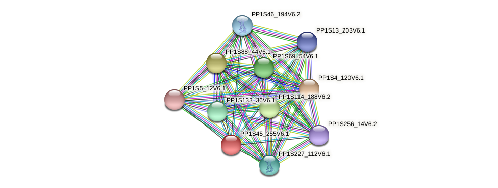 PP1S45_255V6.1 protein (Physcomitrella patens) - STRING interaction network
