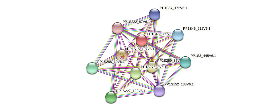 PP1S45_265V6.1 protein (Physcomitrella patens) - STRING interaction network