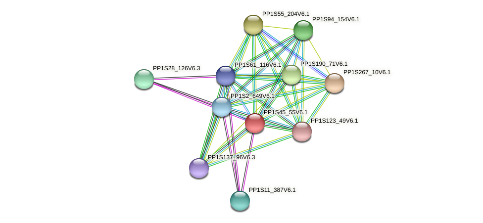 PP1S45_55V6.1 protein (Physcomitrella patens) - STRING interaction network