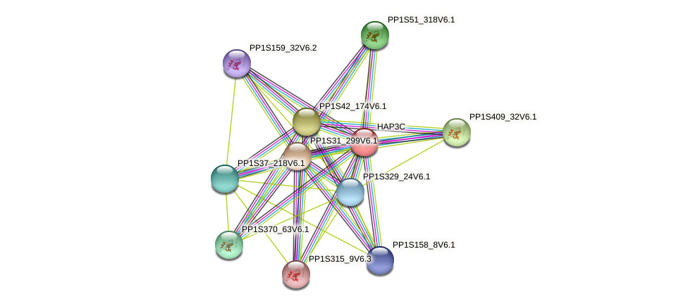 PP1S462_7V6.1 protein (Physcomitrella patens) - STRING interaction network