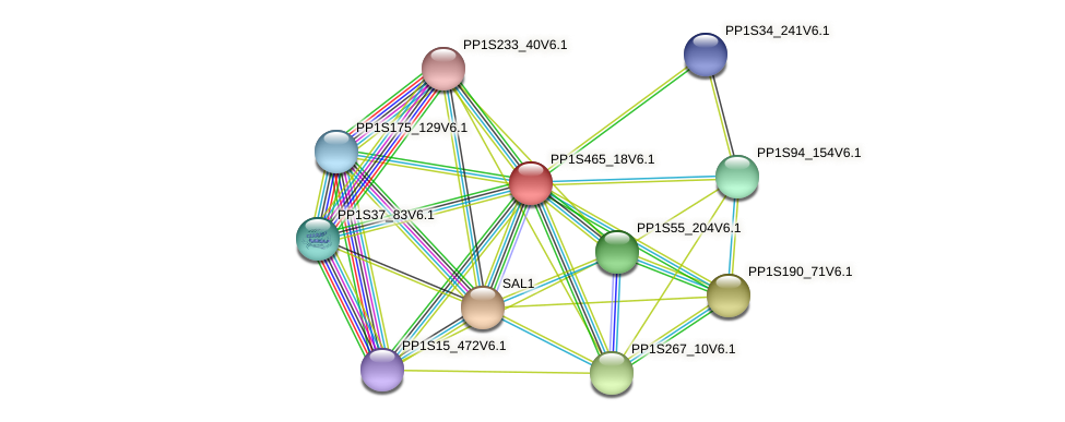 PP1S465_18V6.1 protein (Physcomitrella patens) - STRING interaction network