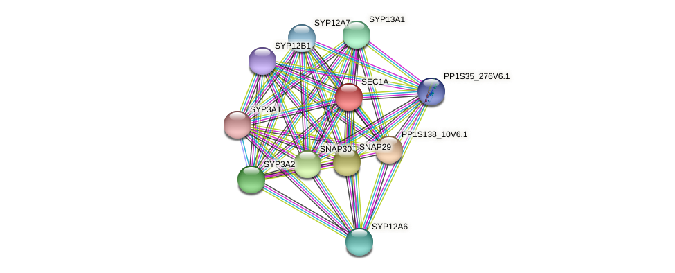 SEC1A protein (Physcomitrella patens) - STRING interaction network