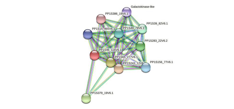 PP1S46_116V6.1 protein (Physcomitrella patens) - STRING interaction network