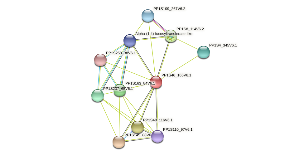 PP1S46_165V6.1 protein (Physcomitrella patens) - STRING interaction network