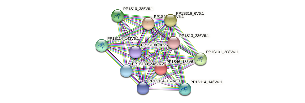 PP1S46_183V6.1 protein (Physcomitrella patens) - STRING interaction network