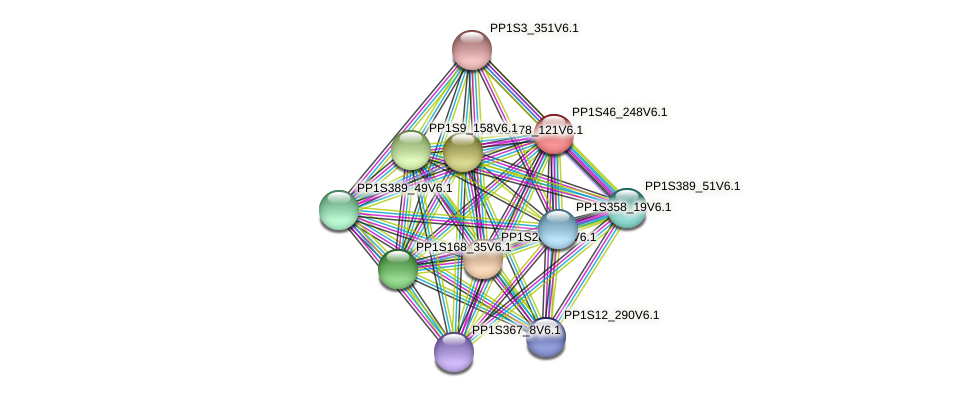 PP1S46_248V6.1 protein (Physcomitrella patens) - STRING interaction network