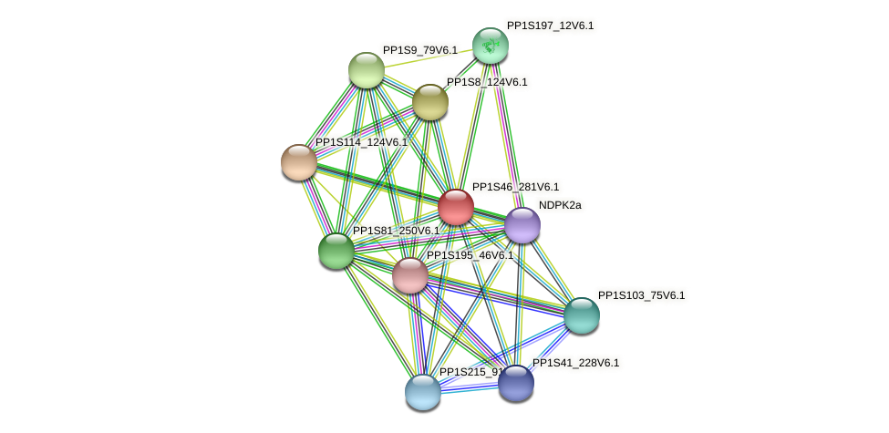 PP1S46_281V6.1 protein (Physcomitrella patens) - STRING interaction network