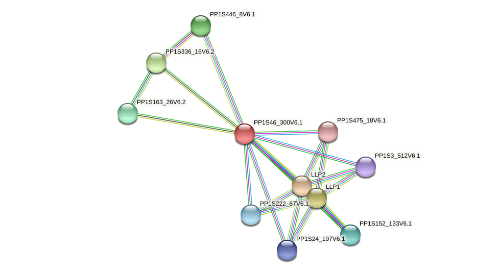 PP1S46_300V6.1 protein (Physcomitrella patens) - STRING interaction network