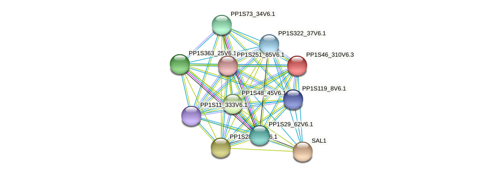PP1S46_310V6.1 protein (Physcomitrella patens) - STRING interaction network