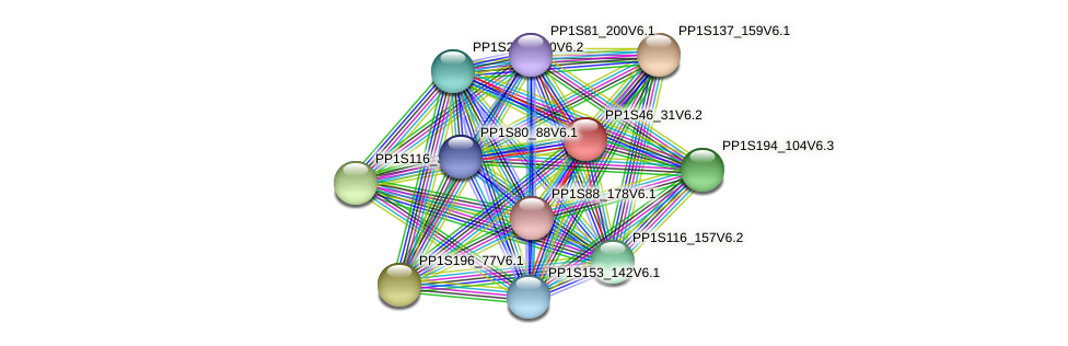 PP1S46_31V6.1 protein (Physcomitrella patens) - STRING interaction network