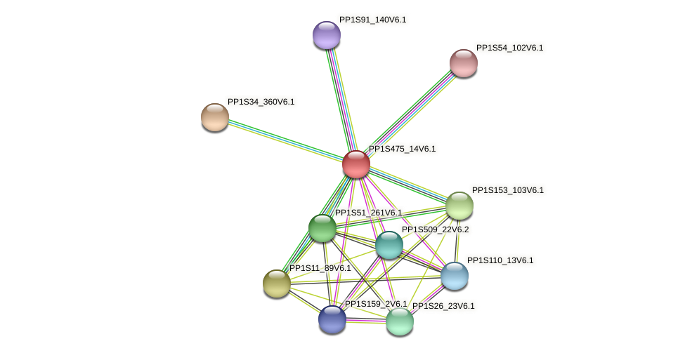 PP1S475_14V6.1 protein (Physcomitrella patens) - STRING interaction network