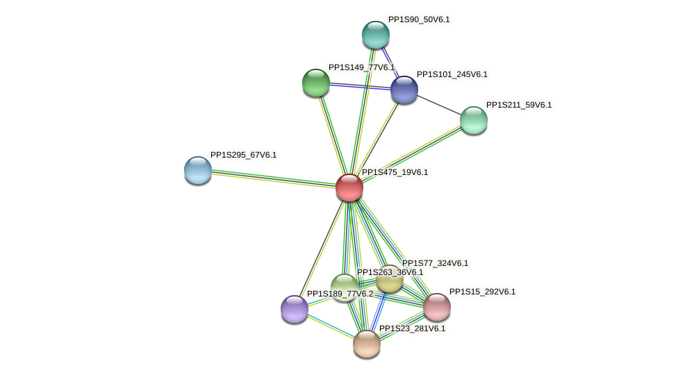 PP1S475_19V6.1 protein (Physcomitrella patens) - STRING interaction network