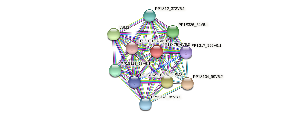 PP1S475_6V6.1 protein (Physcomitrella patens) - STRING interaction network