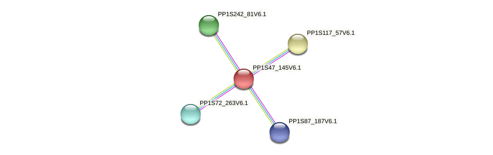 PP1S47_145V6.1 protein (Physcomitrella patens) - STRING interaction network