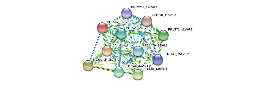 PP1S47_153V6.1 protein (Physcomitrella patens) - STRING interaction network