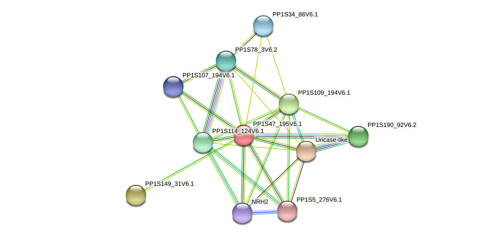 PP1S47_195V6.1 protein (Physcomitrella patens) - STRING interaction network