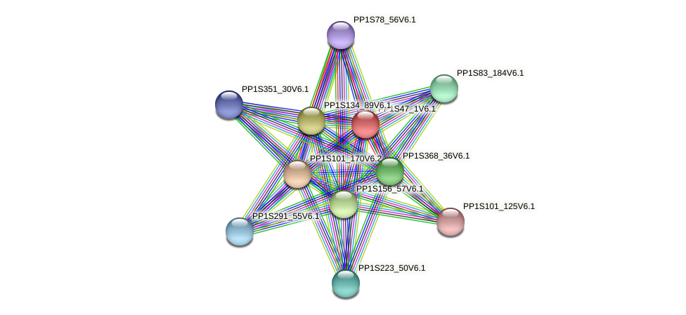 PP1S47_1V6.1 protein (Physcomitrella patens) - STRING interaction network