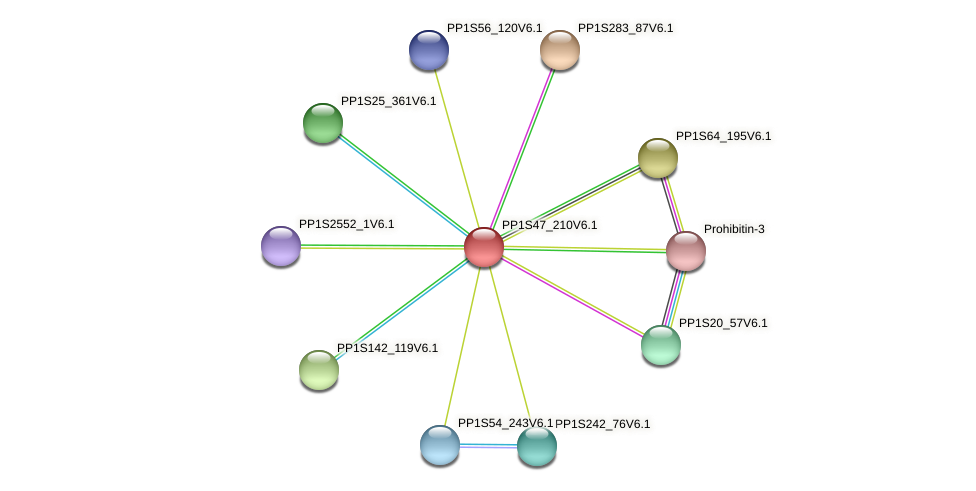 PP1S47_210V6.1 protein (Physcomitrella patens) - STRING interaction network