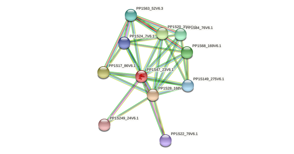 PP1S47_23V6.1 protein (Physcomitrella patens) - STRING interaction network