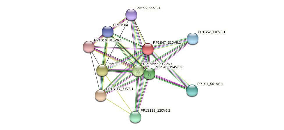 PP1S47_310V6.1 protein (Physcomitrella patens) - STRING interaction network
